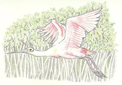 Spoonbill Drawing - Mangrove Flyer - Pencil Without Water by Sue Bonnar