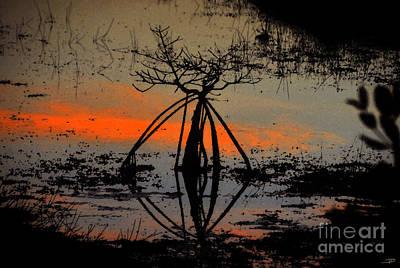 Mangrove Silhouette Print by David Lee Thompson