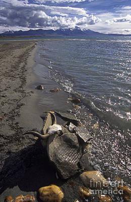 2 Solitudes Photograph - Mani Stone At Lake Manasarovar - Tibet by Craig Lovell