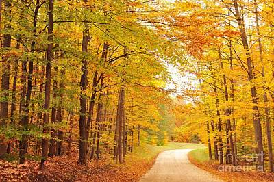 Forest Photograph - Manisee National Forest In Autumn by Terri Gostola