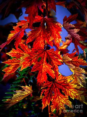 Maple Leaves Print by Robert Bales