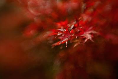Maple Print by Mel Brackstone