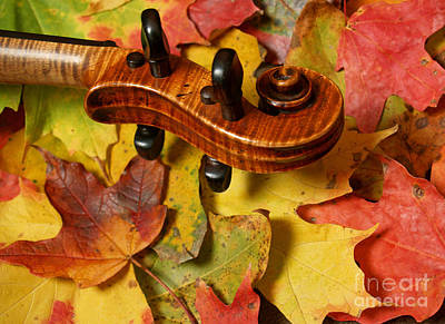 Maple Violin Scroll On Fall Maple Leaves Print by Anna Lisa Yoder