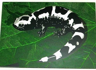 Salamanders Mixed Media - Marble Salamander by Chris Hedges