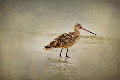Tide Photograph - Bunche Beach - Marbled Godwit by J Darrell Hutto