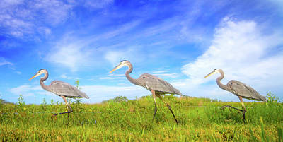 March Of The Great Blue Herons Print by Mark Andrew Thomas