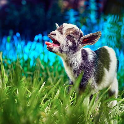 Baby Goat Kid Singing Print by TC Morgan