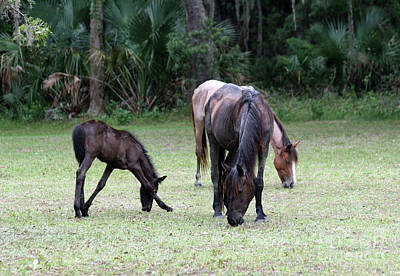 Beach Photograph - Mare And Foal On Cumberland Island by D Hackett