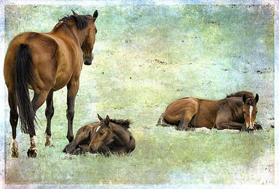 Pedigree Art Digital Art - Mare And Two Foals by Belinda Greb