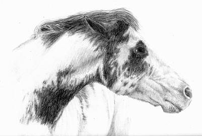 Pinto Drawing - Mare by Suzanne Sudekum