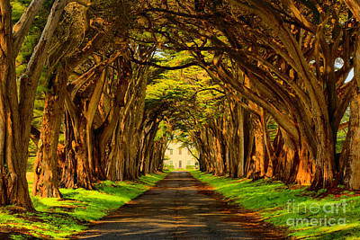 Marin County Cypress Tunnel Print by Adam Jewell