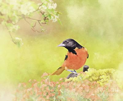 Oriole Mixed Media - Marmalade Sky by Ulanawa Foote