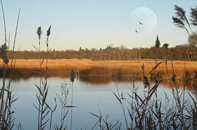 Clear Sky Photograph - Marshland by Diana Lee Angstadt