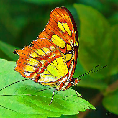 Digitally Manipulated Photograph - Marvelous Malachite Butterfly by ABeautifulSky Photography