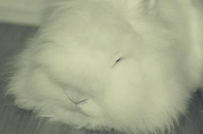 Bunny Photograph - Mashy Potato by  The Art Of Marilyn Ridoutt-Greene