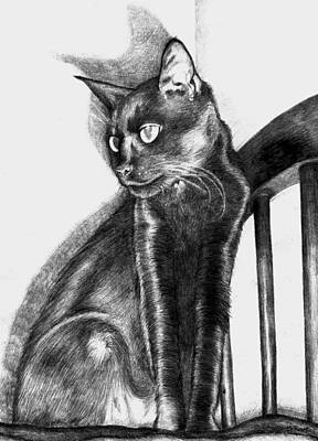 Old Friends Drawing - Maurice  by Shawna Rowe
