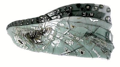 Mayfly Wing  Print by Sarah King