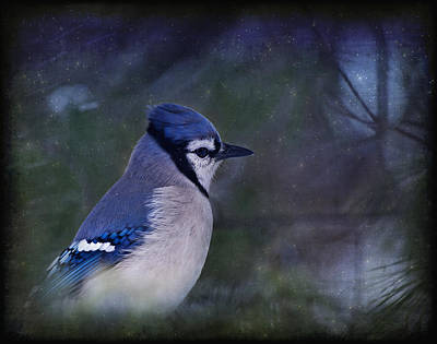 Bluejay Photograph - Me Minus You - Blue by Evelina Kremsdorf