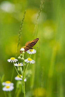 Fluttering Photograph - Meadow Fritillary Butterfly by Christina Rollo