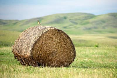 Meadowlark Photograph - Meadowlark Heaven by Todd Klassy