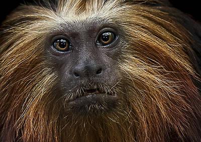Primate Photograph - Medicine Man by Paul Neville