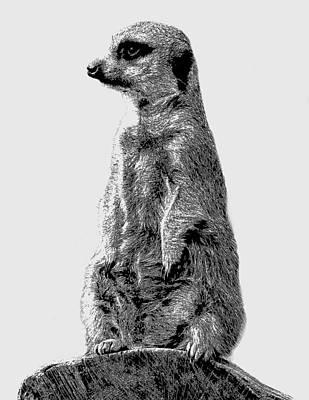 Meerkat Drawing - Meerkat Etching by Greg Noblin