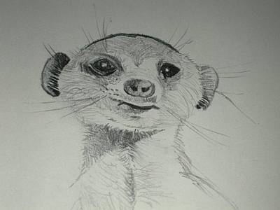 Meerkat Drawing - Meerkat by Gordon Shaw