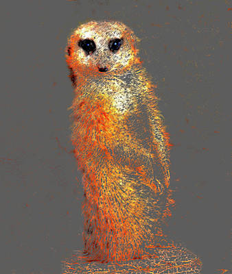 Meerkat Digital Art - Meerkat Original by David Lee Thompson