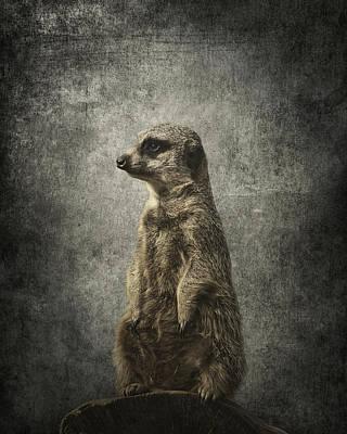 Groundhog Digital Art - Meerkat Portrait by Greg Noblin