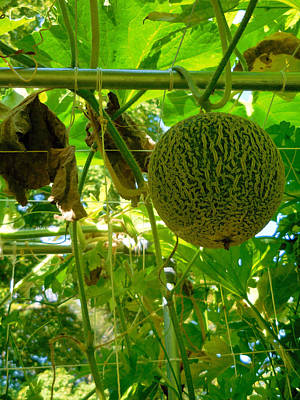Melons On Tree 2 Print by Lanjee Chee