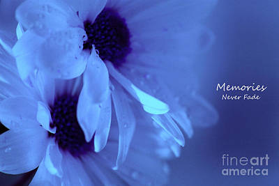 White Daisy Photograph - Memories Never Fade by Krissy Katsimbras