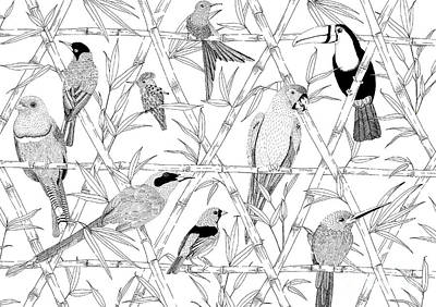 Toucan Drawing - Menagerie Black And White by Jacqueline Colley
