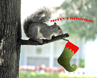 Squirrel Digital Art - Merry Christmas To All by Adele Moscaritolo
