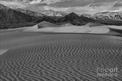 Mesquite Dunes Black And White Print by Adam Jewell