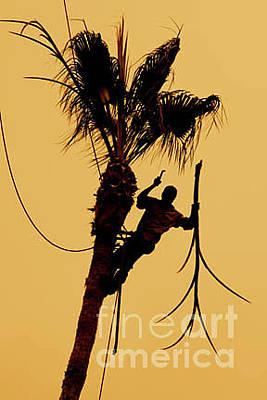 Malibu Photograph - Mexican Fan Palm by Maureen J Haldeman