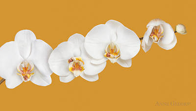 Mia, Nakeeta, Mia & Phoenix In Moth Orchids Print by Anne Geddes