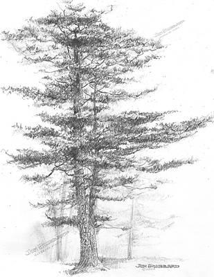 Michigan State Drawing - Michigan-eastern White Pine by Jim Hubbard