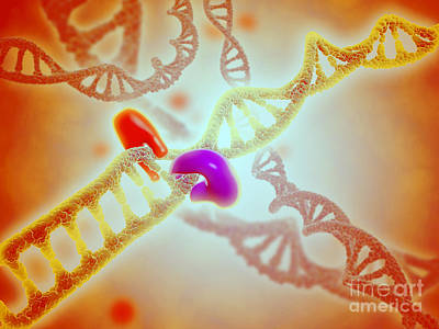 Microscopic View Of Dna Binding Print by Stocktrek Images