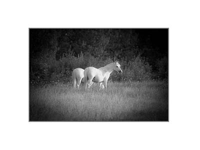 Midi White Horses. Print by Antonio Costa