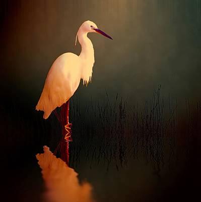 Stork Digital Art - Midnight Egret by Sharon Lisa Clarke