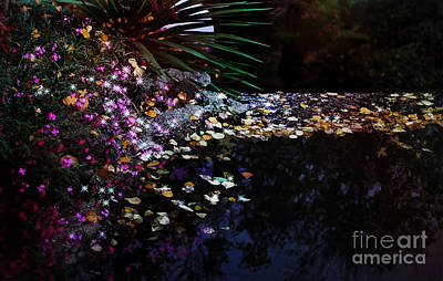 Magical Place Photograph - Midnight Oasis by Jasna Buncic