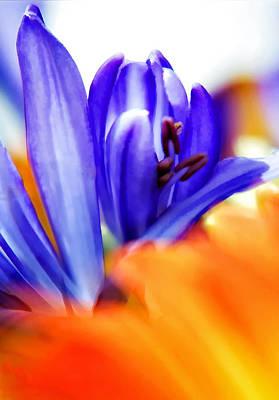 Blooming Digital Art - Midsummer Dream by Steve Harrington