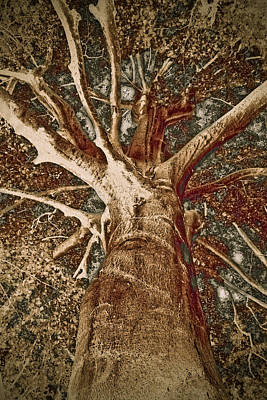 Mighty Tree Print by Frank Tschakert