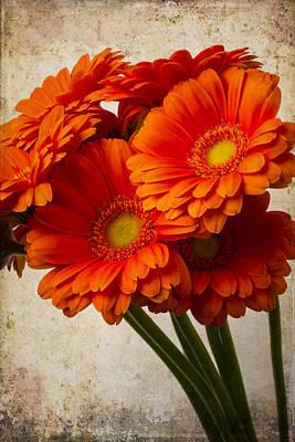 Gerbera Daisy Photograph - Mini Textured Gerberas by Garry Gay