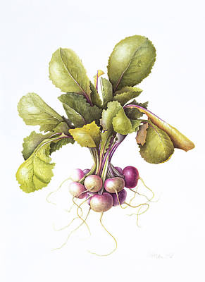 Turnips Painting - Miniature Turnips by Margaret Ann Eden