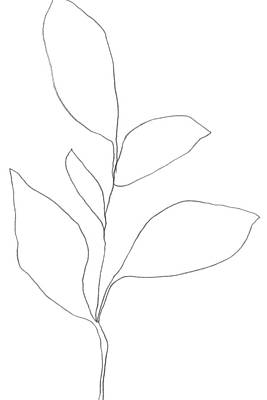 Pottery Barn Style Drawing - Minimalist Botanical Line Drawing 2 by Janine Aykens