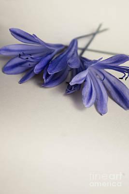 Design With Photograph - Minimalist Modern Flower Artwork by Jorgo Photography - Wall Art Gallery