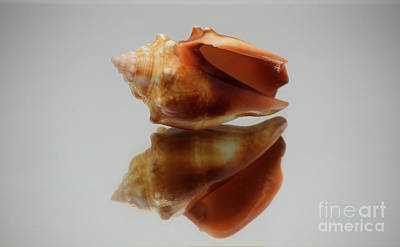 Photograph - Mirrored Conch by Patti Whitten