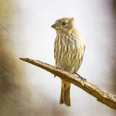 Finch Digital Art - Miss Finch Bright Perch by Bill Tiepelman