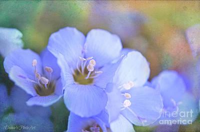 Missouri Wildflowers 5  - Polemonium Reptans -  Digital Paint 5 Print by Debbie Portwood
